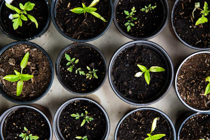 How To Reduce Your CarbonFootprint